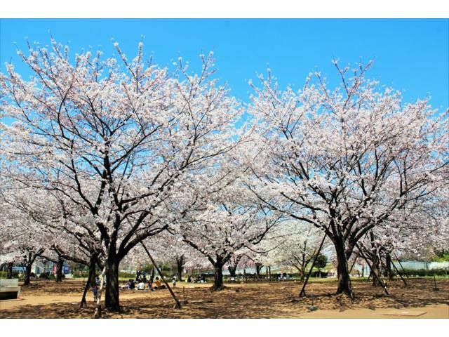 木場公園BBQレンタル 花見